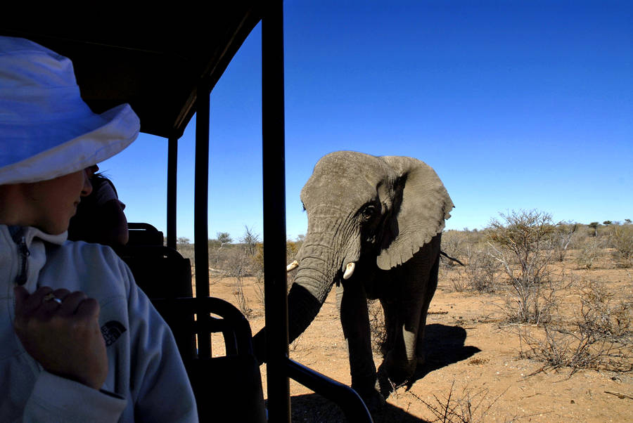 Namibia mit Kindern - Namibia for family - Tierbeobachtungen