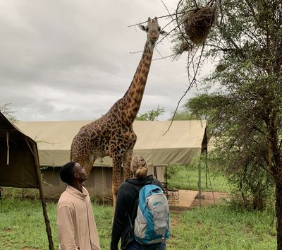 Tansania Familienreise - Tansania Family & Teens - Ngorongoro Conservation Area - Giraffe in Camp