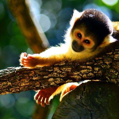 Garden Route for family - Monkeyland