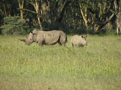 Kenia Familienreise - Kenia for family individuell - Lake Nakuru - Nashorn Mutter und Kind