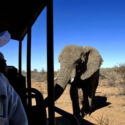 Familienurlaub Namibia - Namibia for family individuell - Elefant direkt am Jeep