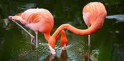 Florida Familienreise - Florida for family - Everglades Flamingos